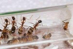 Как сделать муравейник в домашних условиях?