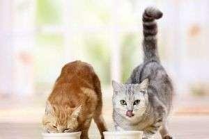 Как выбрать корм для кошки?