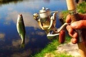 Как выбрать удочку для летней рыбалки? Советы, видео