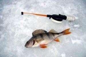 Ловля рыбы на мормышку зимой и летом