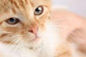 Глисты у кошек: симптомы, профилактика, способы лечения
