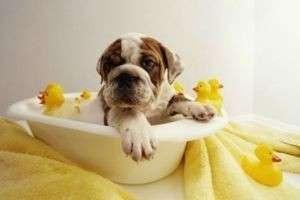 Как помыть щенка? Полезные советы и видео