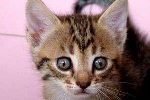 Чем кормить котят 1 месяц: меню для маленьких хищников