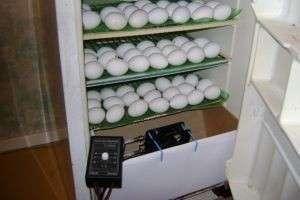 Как сделать инкубатор своими руками из ящика или из холодильника