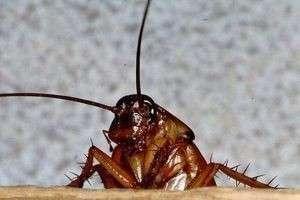 К чему снится таракан: толкования из разных сонников