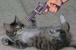 Как отучить кота гадить где попало: самые эффективные способы
