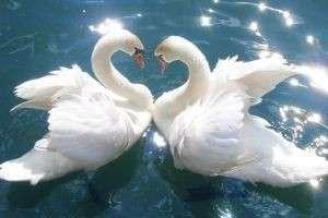 Самые верные животные: странности и причуды животной любви