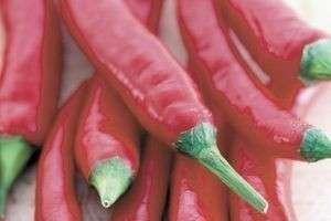Самая горькая еда в мире – овощи, специи и блюда
