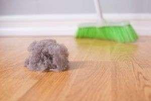 Откуда берется пыль в квартире?