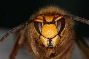 Что делать при укусе осы: как быстро снять боль, отек и избежать тяжелых последствий
