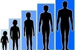 До скольки лет растёт человек?