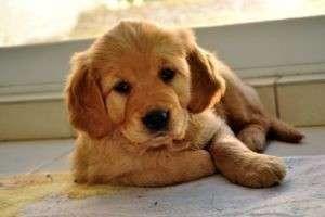 Как назвать щенка мальчика — какое имя выбрать для маленькой и большой собачки