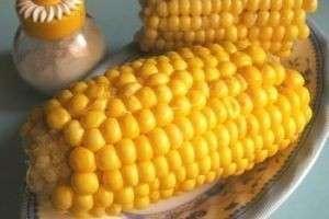 Как варить кукурузу в початке: в кастрюле, мультиварке и микроволновке