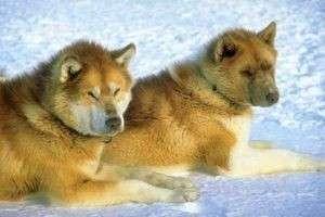 Кинологи определили, какая самая злая порода собак