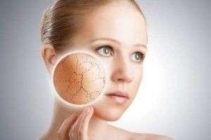 Питательные крема для сухой кожи, жирной и комбинированной: особенности их составов