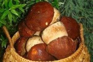Как вкусно приготовить белый гриб