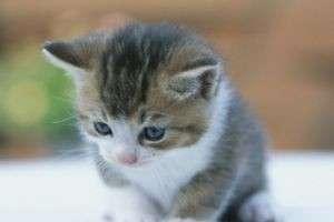 Как устроенно кошачье зрение?