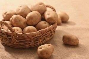 История появления картофеля на Руси