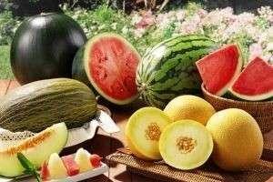 Удобрение для бахчевых: арбузов, дыни, тыквы