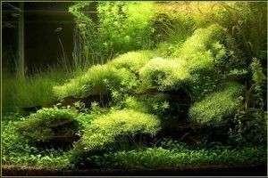 Удобрения для аквариумных растений: покупные и сделанные своими руками