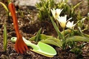 Органические удобрения для огорода: их виды и характеристики, варианты подкормки