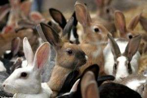 К чему снится кролик: толкования сновидений