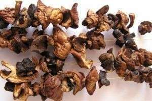Как сушить грибы в духовке правильно — подготовка, процесс и хранение
