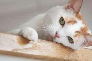 Колит у животных симптомы и лечение