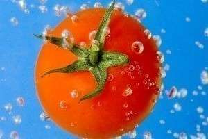 Как выбирать помидоры?