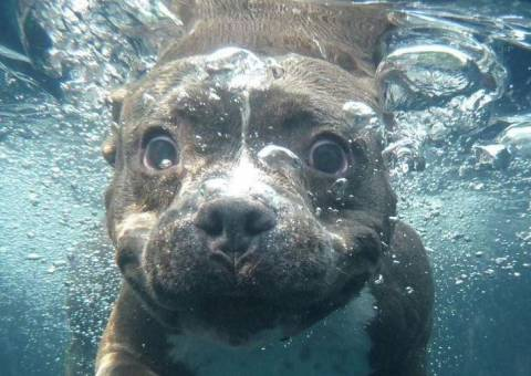 Как научить плавать собаку, если она боится воды?