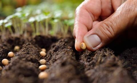 Муки выбора: как выбрать семена для посадки?