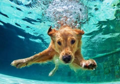 Как научить плавать собаку?