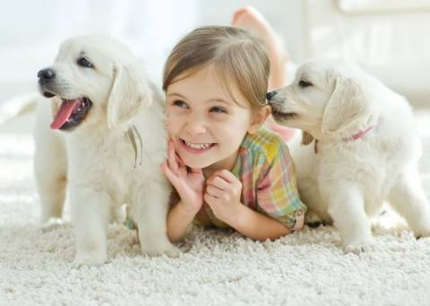 Питомец в доме: как выбрать домашнее животное?