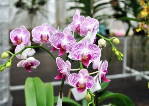 Как подкармливать орхидею в домашних условиях?