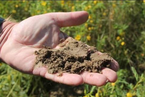 Как улучшить песчаную почву?