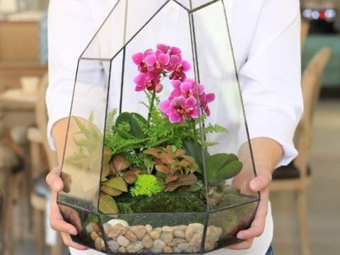 Композиции с орхидеями: как самому создать флорариум?