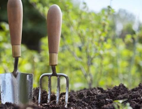 Посадка смородины весной: как правильно высаживать и что учитывать?