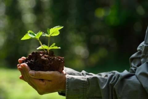 Как вырастить клубнику из семян: все «за» и «против»