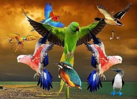 Международный день птиц – 1 апреля
