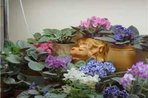 Домашние растения в нашей жизни