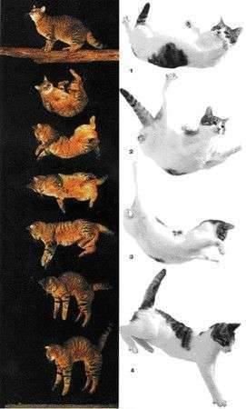 Почему кошки выживают, упав с огромной высоты?