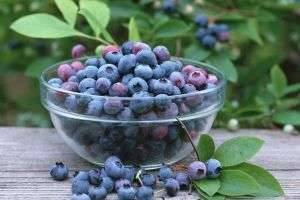 Черника: польза и вред хорошо знакомой ягоды