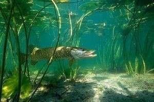 Где лучше ловить рыбу, а где нельзя этого делать сейчас: всему свое место