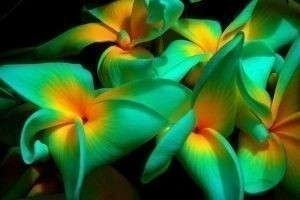 Красивые тропические цветы: прекрасные, опасные, домашние