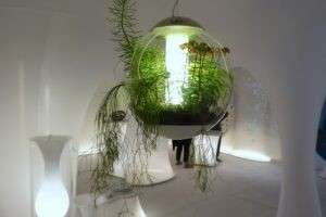 Лампа дневного света для растений: зачем  нужна и как использовать