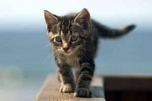 Как назвать котёнка-девочку: лучшее имя для нового жильца