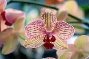 6 причин, почему желтеют листья у орхидеи