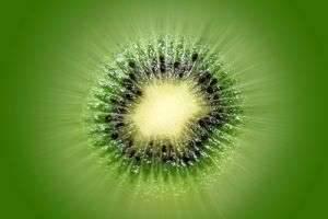 Лианы у вас дома, или Как растет киви в природе и на приусадебном участке