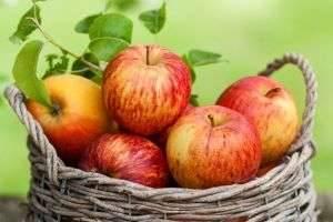 Как хранить яблоки зимой: где и в чем лучше держать фрукты, чтобы они остались свежими