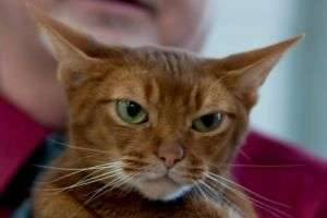 Признаки бешенства у кошек – сигнал бедствия